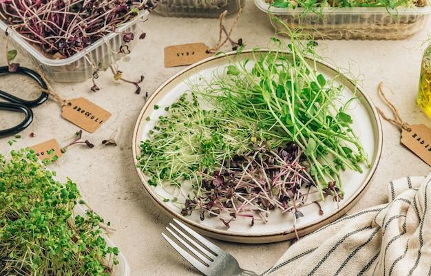 신선한 마이크로 그린 샐러드. 건강 식품 개념.