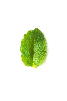 Fresh mint isolated on white background. food mockup.