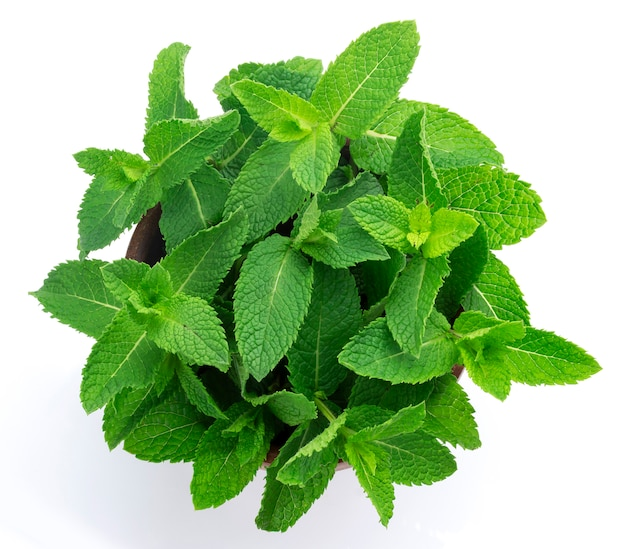 Fresh mint leaves bunch isolated on white, top view