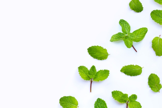 Fresh mint leaves isolated on white background. copy space