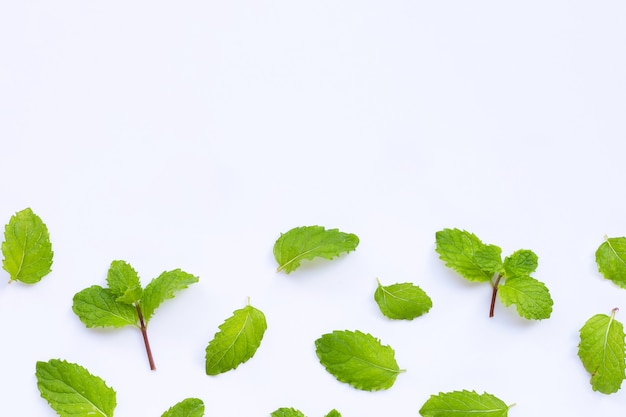 Fresh mint leaves isolated on white table. copy space