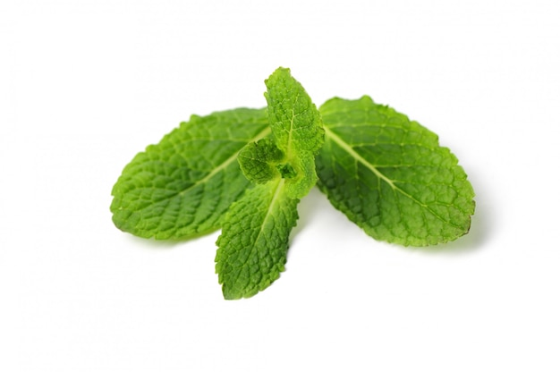 Fresh mint leaves isolated