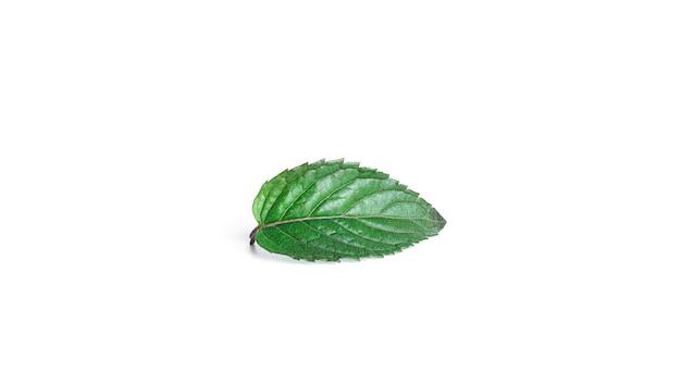 Листья свежей мяты на белом фоне. фото высокого качества