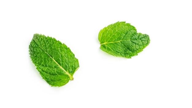 Свежие листья мяты на белом фоне