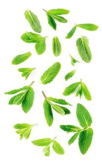 白い表面に新鮮なミントの葉
