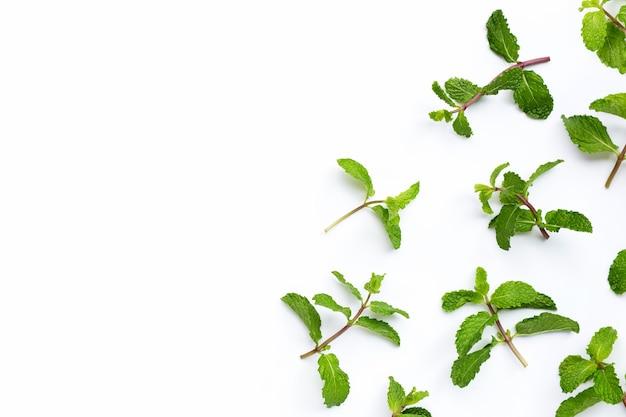 신선한 민트 흰색 바탕에 나뭇잎. 공간 복사