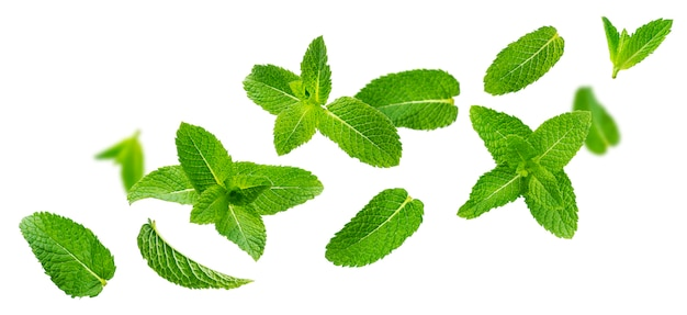 Fresh mint leaves, peppermint foliage isolated on white