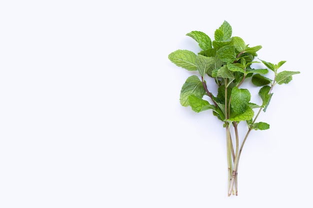 Fresh  mint leaves  on white background.