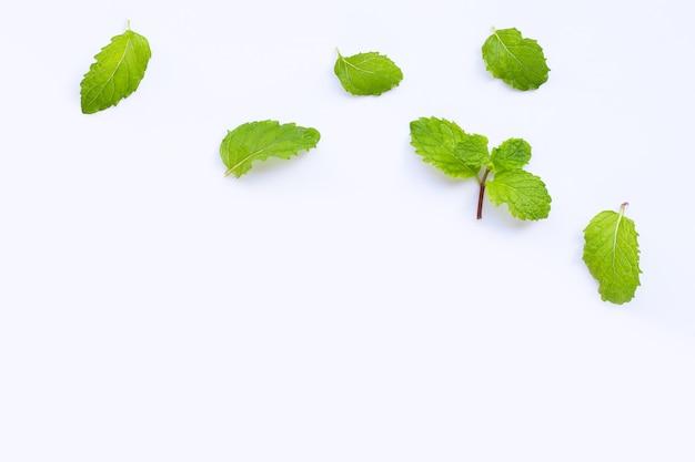 신선한 민트 잎