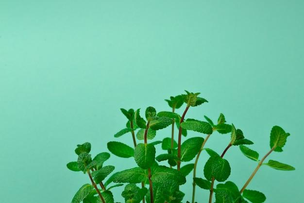Свежая мята на зеленом фоне. место для текста или дизайна.