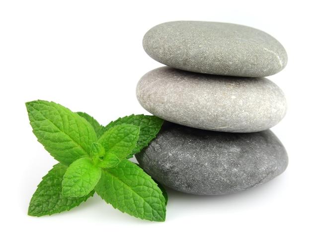 Свежая мята на камнях крупным планом