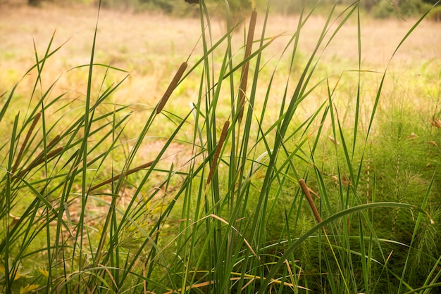 Fresh morning dew on spring grass, natural background - closeup