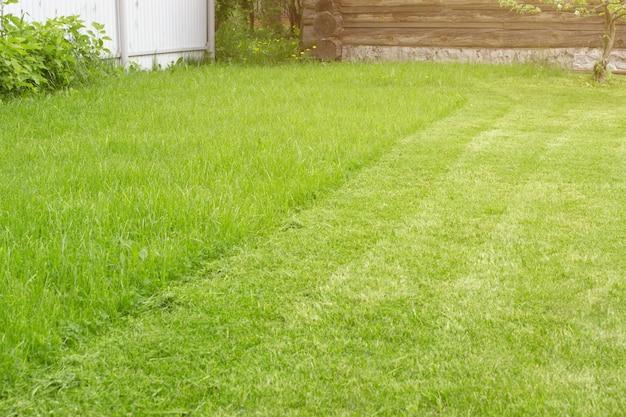 신선한 mown 잔디 절단 잔디입니다. 원 예 배경입니다. 원예 및 조경 개념입니다.