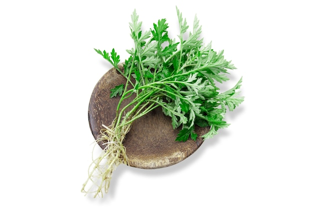 Fresh mugwort leaves with root isolated on white background