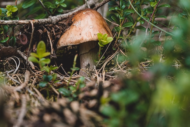 Funghi freschi strisciano fuori dal terreno