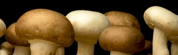 Свежие грибы баннер крупным планом, на черном фоне, фото концепции органических и натуральных ингредиентов