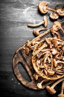 바구니에 신선한 버섯 꿀 agarics.