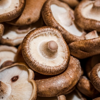 Fresh mushrooms for sale in market