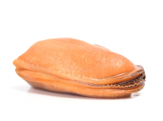 新鮮なムール貝