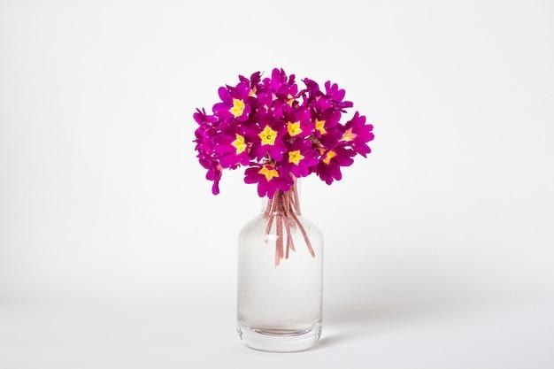 Свежий натуральный букет весенних цветов примулы в стеклянной вазе на белом