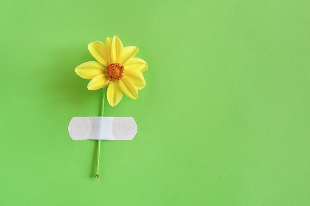 Fresh natural yellow flower attached adhesive plaster on a green