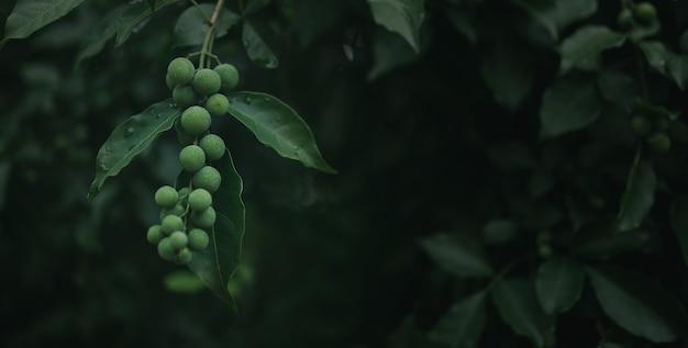 新鮮な自然の背景の概念、水滴と森の緑の森の果実。