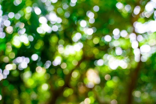 新鮮な自然の緑のぼやけたボケ味の背景。