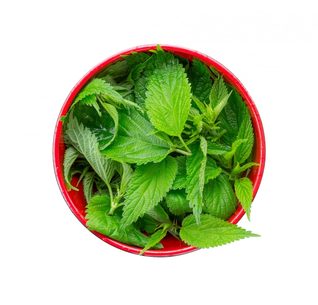Fresh nettle leaves in a red bowl isolated