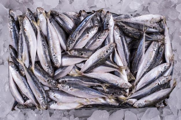Fresh ocean fish on ice