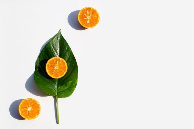 白地に緑の葉と新鮮なオレンジ色の果実