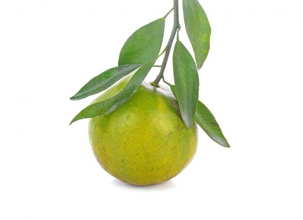 Свежий апельсиновый фрукт с листьями на белом фоне