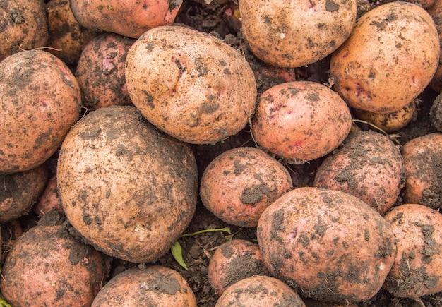 新鮮な市場での新鮮な有機茶色の皮をむいていないジャガイモ、背景。ジャガイモのテクスチャ、食品の背景。