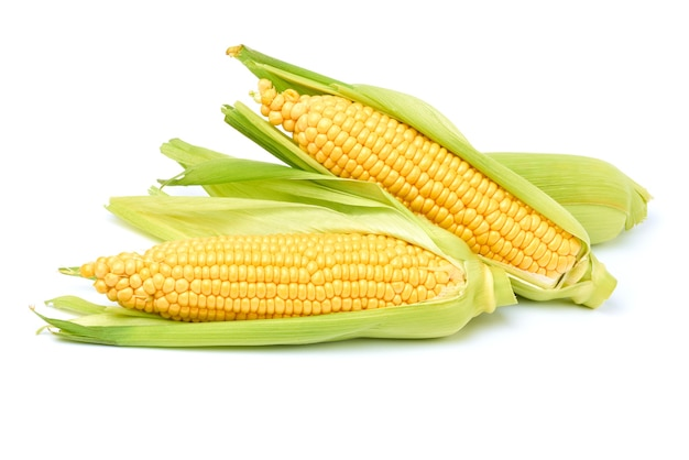 白で分離された新鮮な有機トウモロコシの穂軸