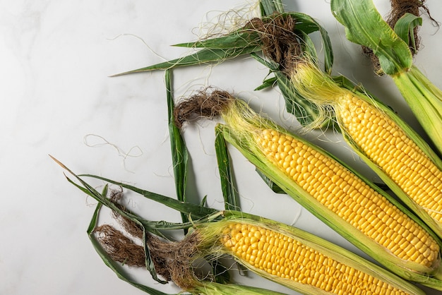 흰색 바탕에 신선한 유기농 옥수수 cobs입니다. 평면도