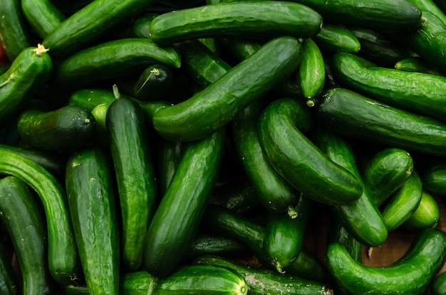 Fresh organic cucumbers sold on market