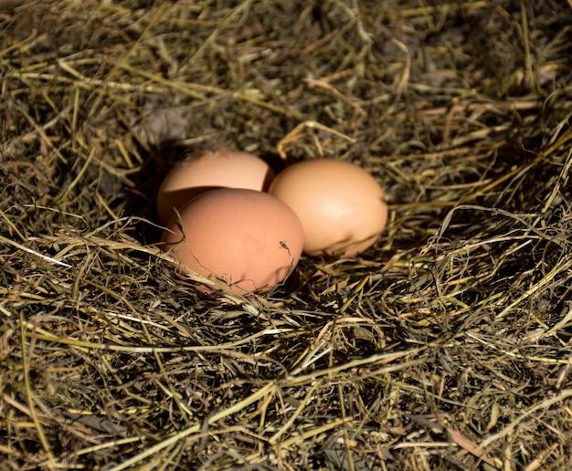 Свежие органические яйца в гнезде сена.