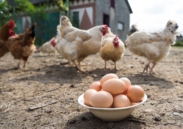 Свежие органические яйца в тарелке. куры на заднем плане