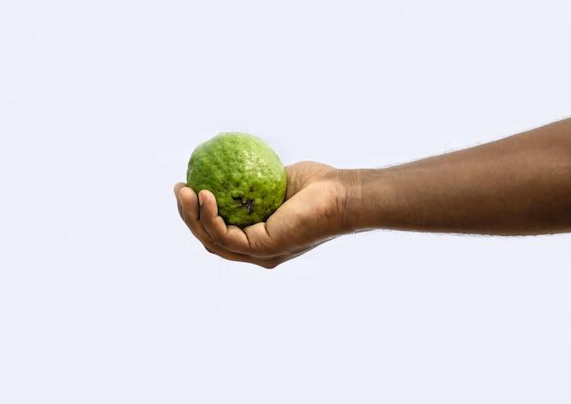 흰색 배경에 고립 된 남성 손에 신선한 유기농 구아바 과일