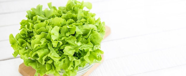 Fresh organic healthy green oak lettuce vegetable banner background