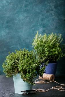 Fresh organic oregano and thyme