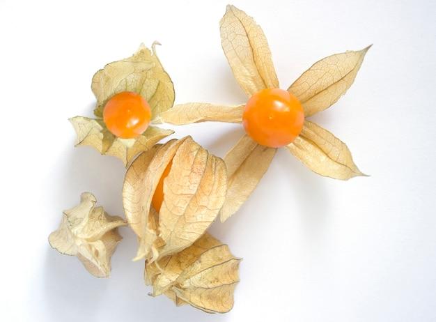Fresh organic physalis (cape gooseberry) peruviana over white