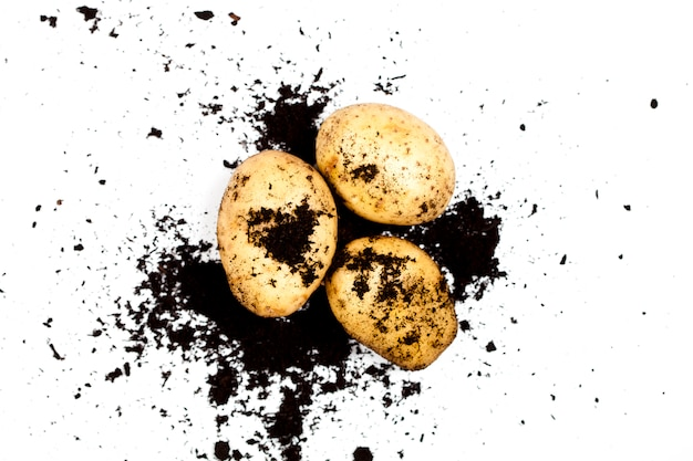 Fresh organic potatoes and soil isolated on white