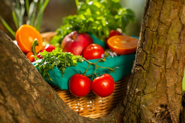 Fresh organic vegetables in wicker basket in the garden on a tree
