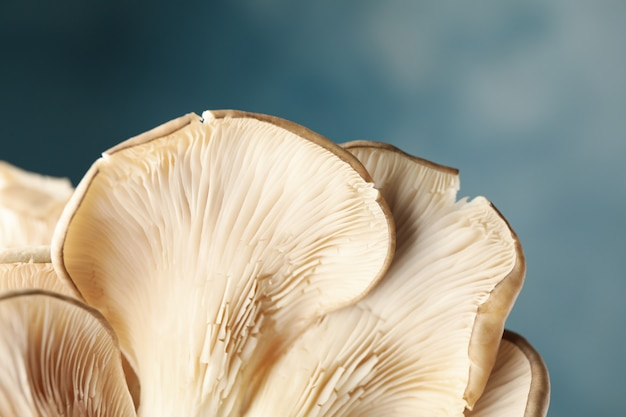 Fresh oyster mushrooms on blue, close up