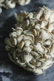 Fresh oyster mushrooms on a gray slate