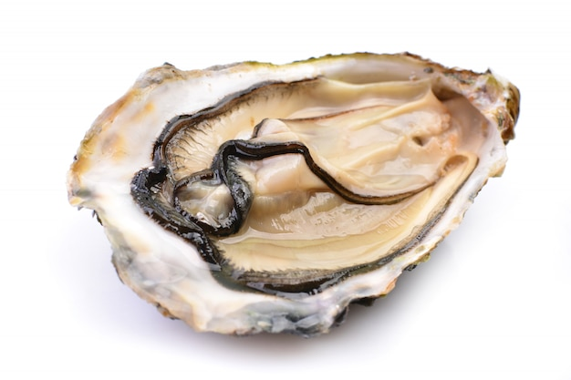 Fresh oysters isolated