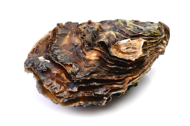 白い表面に新鮮な牡蠣