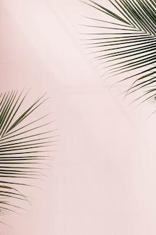 Свежие пальмовые листья на розовом фоне