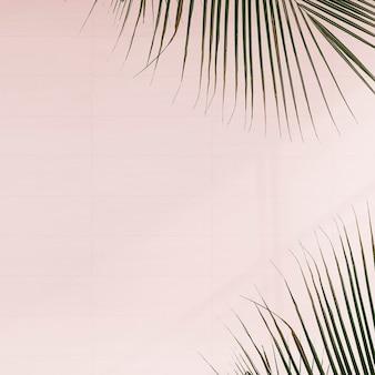 Foglie di palma fresche su sfondo rosa