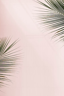Fresh palm leaves on pink background